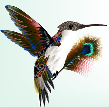 bird with peacock feathers vector