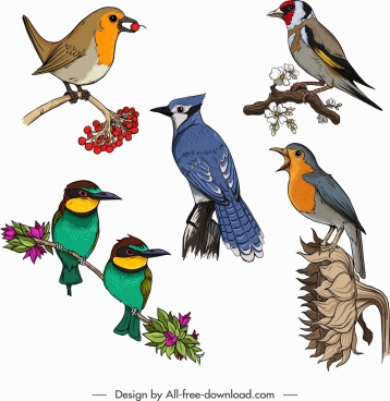 birds creatures icons colorful classical sketch