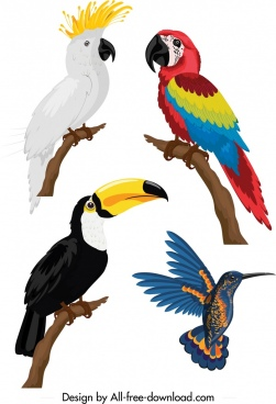 birds icons parrot woodpecker sketch colorful design