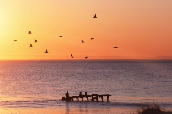 birds migrating for the winter