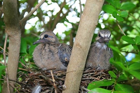 birds nest animal