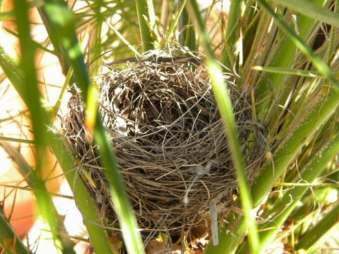 bird's nest nature nest