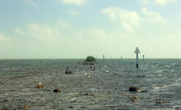 birds nesting on rocks at biscayne national park florida