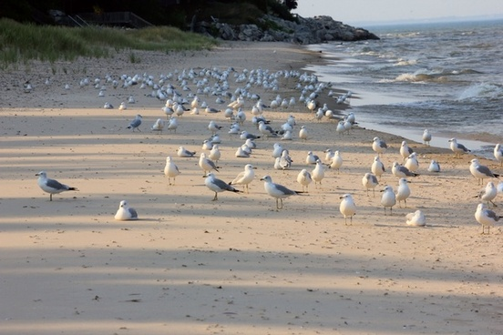 birds on the beach at point beach state park wisconsin