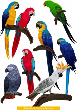 birds species collection parrot owl icons colorful design