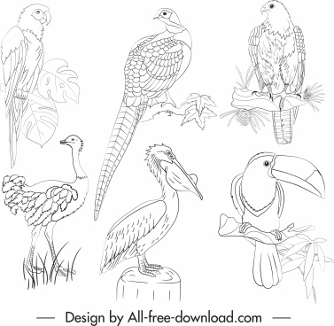 birds species icons black white handdrawn design