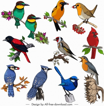birds species icons collection classical multicolored perching sketch