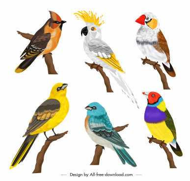 birds species icons colorful cartoon sketch