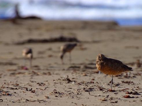 birds stand on one leg beach