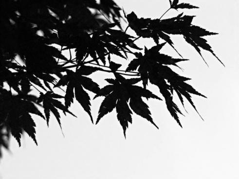 black amp white the leaves branch