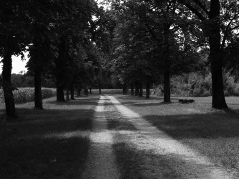 black and white black and white photo wood