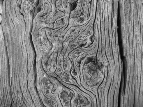 black and white photo wood trunk