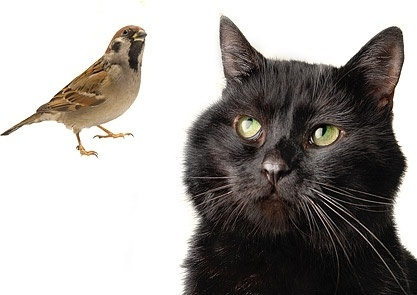 black cat and bird stock photo