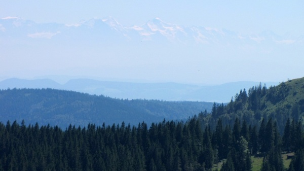 black forest feldberg alpine