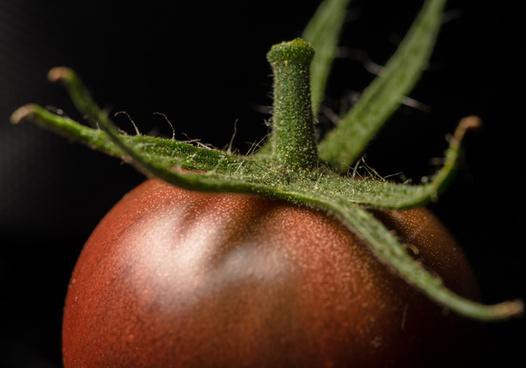 black hybrid cherry tomato
