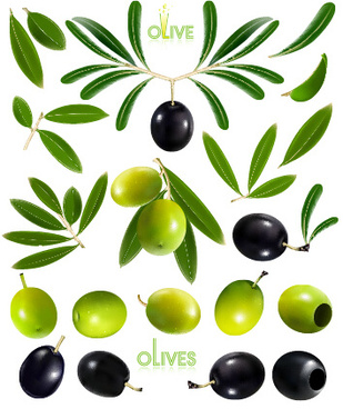 black olives and green olives vector graphics