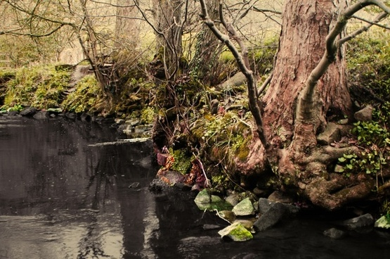 black stream in the forest
