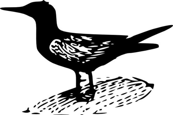 Black Tern clip art