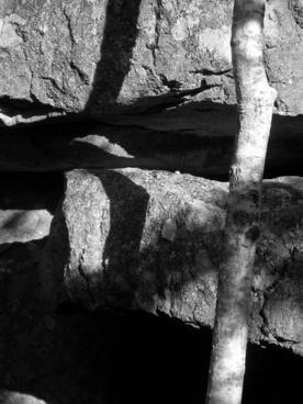 black-and-white shot monochrome shadow
