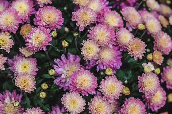 bloom blossom bouquet bright closeup color dahlia