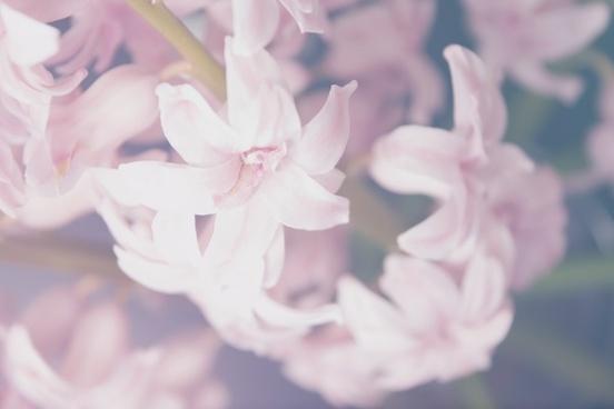 bloom blossom bulb bush child color delicate dof