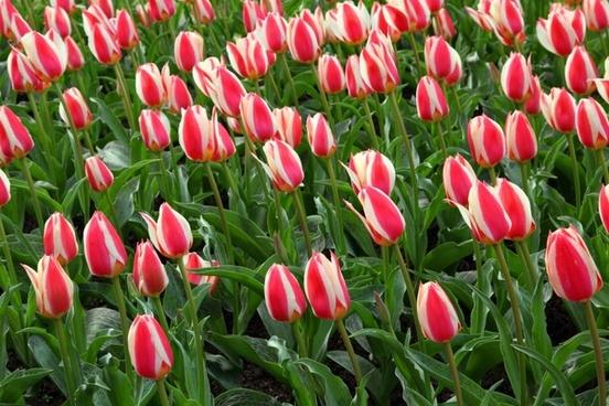 bloom blossom bunch