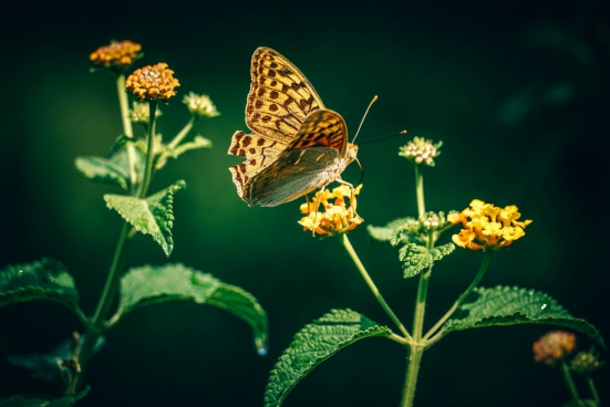 beautiful butterfly perching on yellow flower