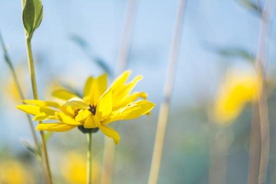 bloom blossom closeup color daffodil dof fleur flor