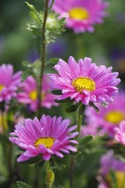 bloom botany bright color detail flower garden