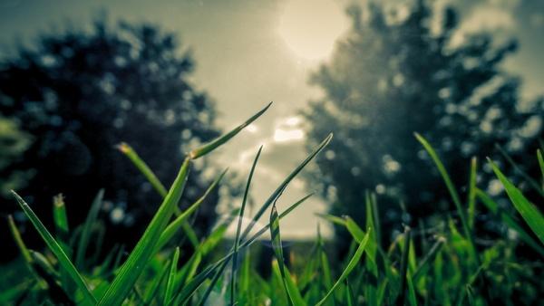 bloom close up field garden grass sun tree up