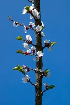 bloom flower branch