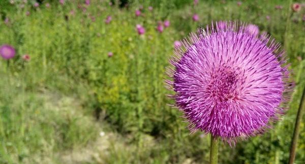 blossom botany closeup color field flora flower
