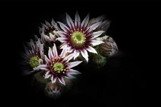 blossom flower plant