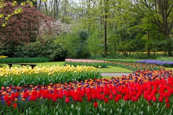 blossom trees color