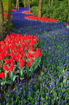 blue and red flower bed