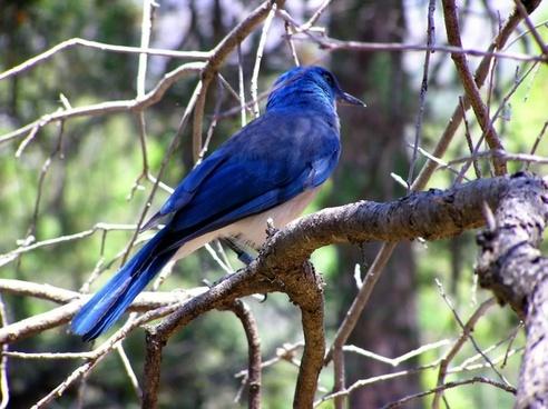 blue bird wildlife tree
