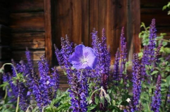 blue blue bell summer