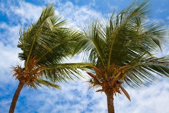 blue cloud coconut