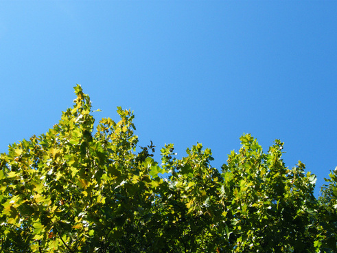 blue sky green earth