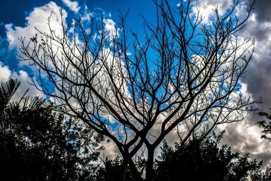 blue sky tree shadow scene