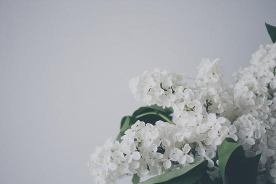 blur botany bright delicate detail elegant flower
