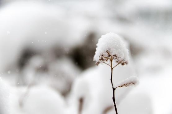 blur branch cold crystal detail dof flower focus