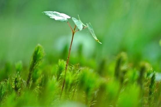 blur bug closeup dew dof drop field forest grass