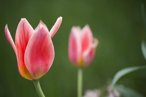 blur bulb closeup color colour easter fleur flora