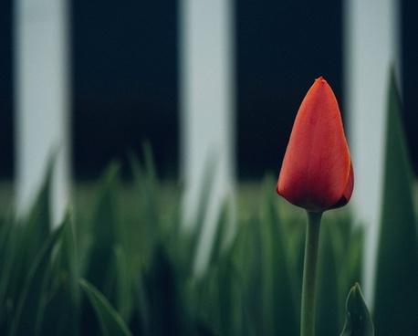 blur bulb color easter field flora flores flower