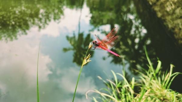 blur butterfly closeup color colour detail field
