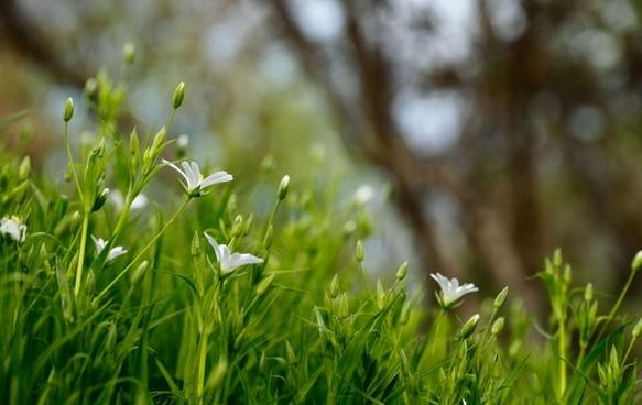 blur closeup field flower forest garden grass