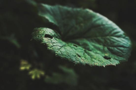 blur fern fish forest garden invertebrate leaf