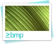 Bmp image file