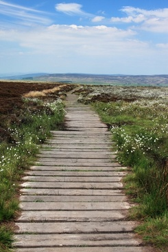 boardwalk footpath green